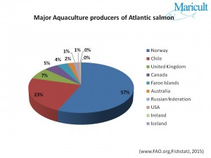 Major Salmon Producers