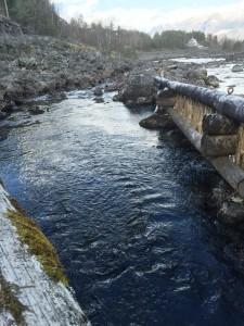 Salmon trap, Bjoreio
